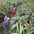 Corn mazes make a great field trip for school children or for a fun outing for families. Corn mazes ...