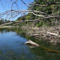 The river is most known for smallmouth bass. Submerged timber makes good fish habitat.