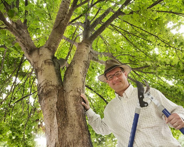 john-baker-co-founder-and-board-president-of-tree-streets-stands-among-the-trunks-of-the-trees-his-group-planted-in-the-2000-block-of-spring-street-after-a-1999-tornado-tore-through-downtown-little-rock