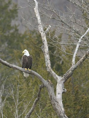 Eagle Tours In Arkansas