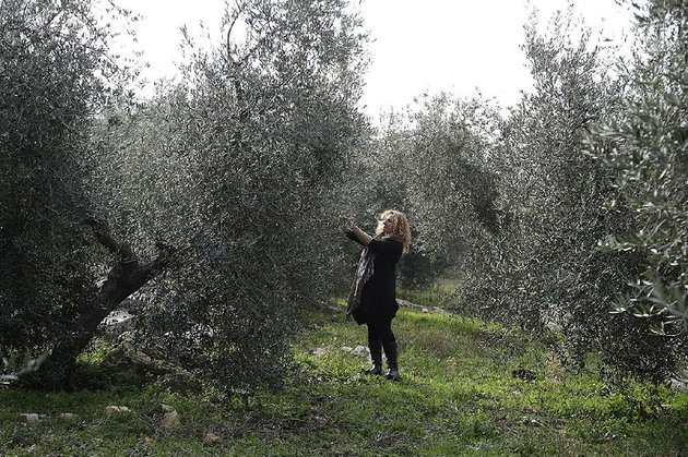 lucia-iannotta-manager-of-an-olive-farm-checks-an-olive-tree-in-capocroce-italy-on-thursday-prices-for-italian-olive-oil-are-expected-to-rise-as-much-as-20-percent-this-year