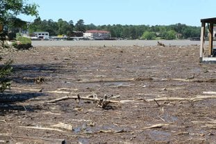 The Sentinel-Record/Richard Rasmussen CLOGGED COVE: Debris from storms over the weekend partially covers a cove on Lake Hamilton near the Airport Road bridge on Monday.