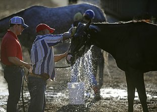 The Associated Press RINSE JOB: Arkansas Derby winner Classic Empire is washed after a workout Wednesday at Pimlico Race Course in Baltimore, site of the 142nd Preakness on Saturday. Classic Empire, last year's male juvenile champion, placed fourth in the May 6 Kentucky Derby at Churchill Downs.