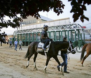 The Associated Press MORNING JOG: With exercise rider Nick Bush aboard, Kentucky Derby winner Always Dreaming walks past the starting gate after a workout Thursday at Pimlico Race Course in Baltimore, site of the 142nd Preakness on Saturday.