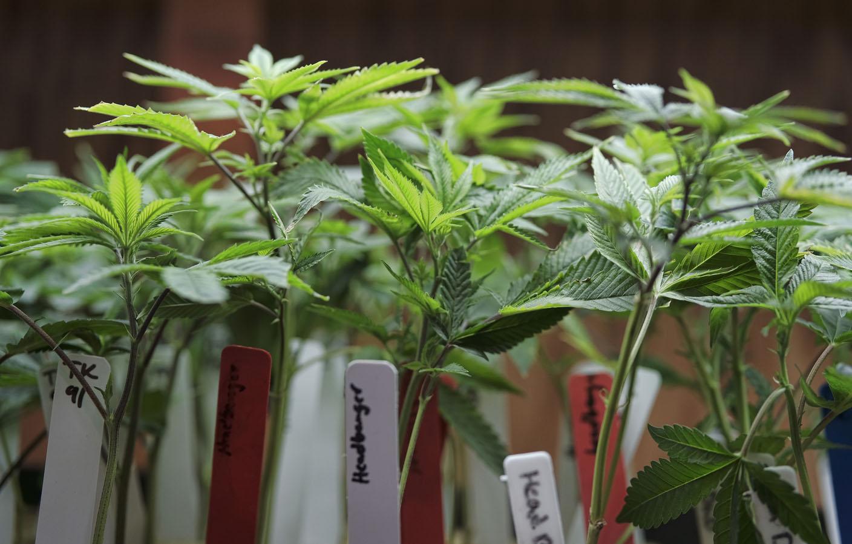 Siloam Springs Hot Springs Order Medical Marijuana Moratoriums