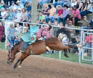 Graham Thomas/Siloam Sunday Cowboy Lane Lerche tries his hand at bareback riding Thursday at opening night of the Siloam Springs Rodeo.