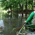 Joe Neal paddles quietly while listening to birds May 26 in a swamp where the War Eagle River joins ...