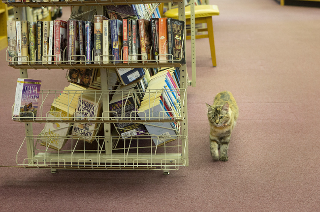 Cat Evicted From Arkansas Library