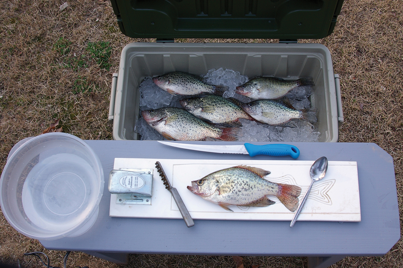 How to fillet and pan dress crappie bluegills and other for Fish cleaning table bass pro