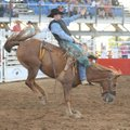 Cody Mounts of Pine Bluff competes in bareback riding Saturday during the final night of the 73rd Ro...