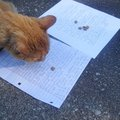 Boat Dock, chief judge of the fish story contest, goes to Joy Long's story to get his cat treat. Tha...