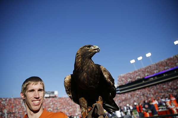 Auburn's eagle named Nova flies down onto the football field before an NCAA college football game, Saturday, Nov. 28, 2015, in Auburn, Ala. (AP Photo/Gerald Herbert)