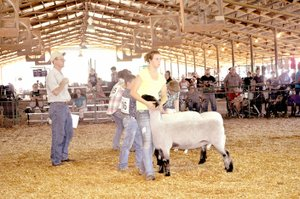 RACHEL DICKERSON/MCDONALD COUNTY PRESS Youth showed their sheep at the McDonald County Fair last week. The grand champion was shown by Bailey Louden, and the reserve grand champion was shown by Tate O'Brien.