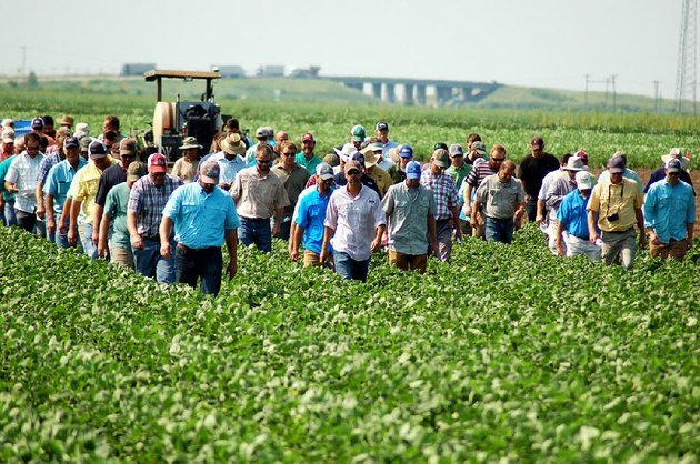farmers-and-agriculture-industry-workers-walk-through-a-mississippi-county-soybean-field-tuesday-at-the-university-of-arkansas-northeast-research-and-extension-center-in-keiser-during-uas-annual-field-day