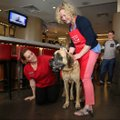 Ashley Oxner, lobby attendant at the Chancellor Hotel, kneels Wednesday to pet Chloe, a 6-7 year old...