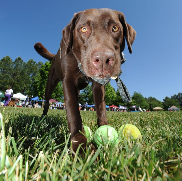 the-humane-society-of-the-ozarks-is-one-of-several-animal-centered-organizations-that-needs-volunteers-for-a-variety-of-duties-including-helping-out-with-their-fund-raising-events-like-the-dogwood-walk-in-gulley-park