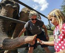 wild art elephants