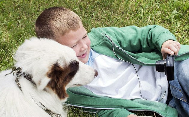 christian-davis-connor-corum-and-his-family-are-helped-out-by-a-very-good-dog-named-pluto-played-by-border-collie-shiloh-in-the-stray