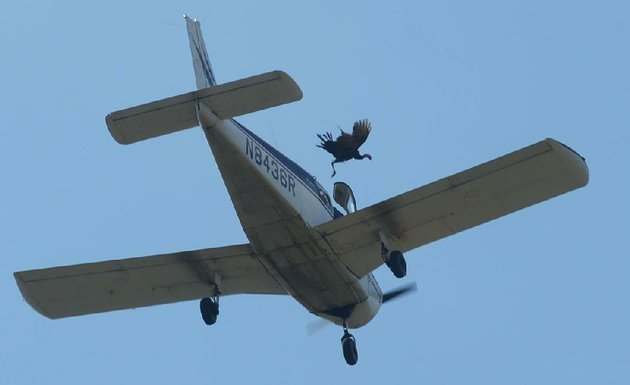 a-live-turkey-is-released-saturday-from-a-plane-flying-over-crooked-creek-during-the-turkey-trot-festival-in-yellville