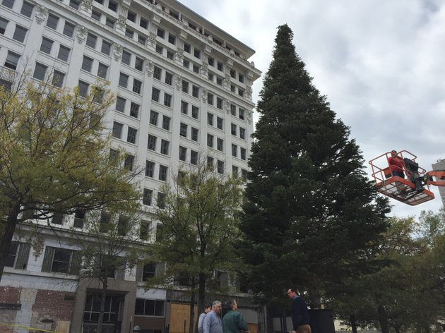 photos videos 40 foot christmas tree installed in little rock supplier says original 55 foot evergreen vandalized - 14 Foot Christmas Tree