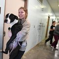 Savanna Thornton carries a dog Monday to the outdoor area of the Springdale Animal Shelter. Thornton...