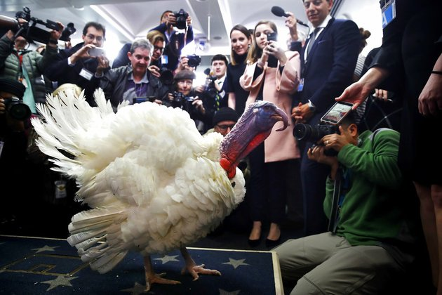 wishbone-one-of-two-turkeys-set-to-be-pardoned-by-president-donald-trump-is-previewed-by-members-of-the-media-tuesday-nov-21-2017-at-the-white-house-briefing-room-in-washington