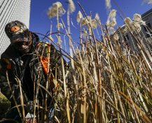wild art grass