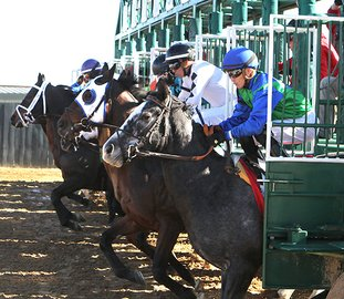 The Sentinel-Record/Richard Rasmussen FIRST OUT: Memphisinmay and Jockey Alex Canchari, right, and Conquest Hiosilver, wearing white blinkers, and jockey Luis Contreras, second from right, break with the field from the gate during the first race at Oaklawn Park on Friday. Conquest Hiosilver won the race and Memphisinmay ran third. Pray Hard finished second.