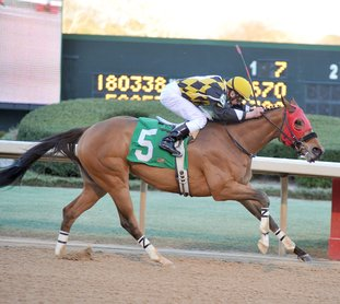 The Sentinel-Record/Mara Kuhn FALLUNOVALOT FAVORITE: Ivan Fallunovalot won the King Cotton Stakes for older sprinters for the second time on Jan. 30, 2016, with jockey Calvin Borel at Oaklawn Park. Ivan Fallunovalot is the program favorite in a field which includes five Oaklawn stakes winners in a King Cotton prep race.
