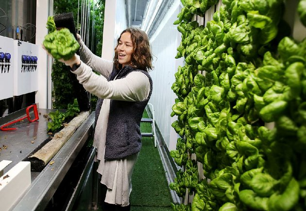 allix-ice-a-senior-at-the-university-of-arkansas-fayetteville-harvests-rex-butterhead-lettuce-on-thursday-inside-the-freight-farms-hydroponic-shipping-container-on-campus