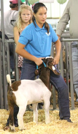 Westside Eagle Observer/SUBMITTED Jacy Smith shows her meat goat during the judging portion of the Benton County Youth Livestock Show at the Benton County Fair in Bentonville Aug. 11, 2017.