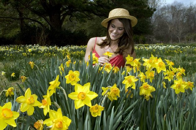historic-houses-and-cemeteries-re-enactments-arts-and-crafts-and-fields-of-daffodils-help-welcome-spring-at-the-25th-annual-camden-daffodil-festival
