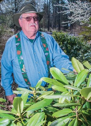 Frank Russenberger of Russellville is the 2017 Pope County Master Gardener of the Year. He volunteered more than 200 hours of service last year to Master Gardener projects. He raises a variety of plants in his own yard, including rhododendron like the one shown in this photograph.
