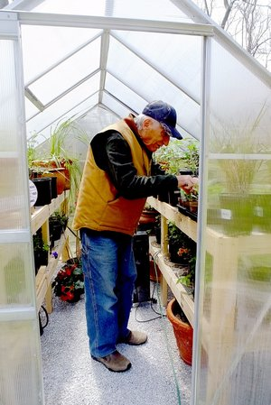 Lynn Atkins/The Weekly Vista A small greenhouse lets Tony LiCause get a head start on the season for both his flowers and his vegetables.