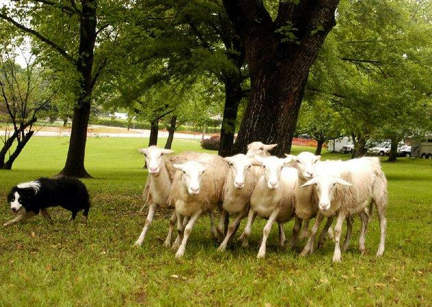 SPECIAL EVENT: Lyon College retraces its roots at Arkansas ...