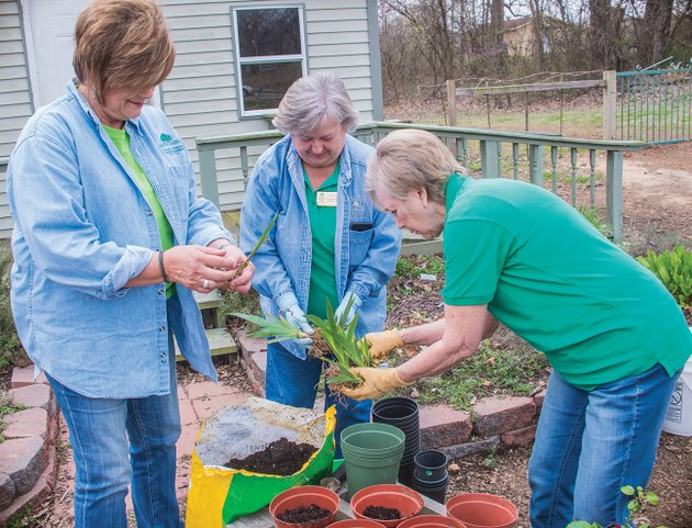 sorting-iris-for-the-upcoming-independence-county-master-gardeners-plant-sale-are-from-left-rose-ann-houston-of-olyphant-charlene-morrison-of-newark-and-suzanne-coots-of-batesville-the-sale-is-scheduled-from-8-am-to-1-pm-april-28-at-the-batesville-national-guard-armory
