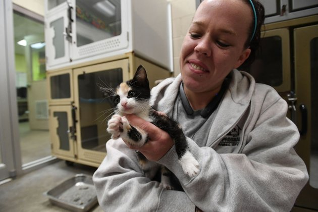 jessica-rodriguez-of-springdale-plays-with-momo-the-kitten-monday-at-the-springdale-animal-shelter-momo-was-found-as-a-stray-and-is-8-weeks-old-rodriguez-is-a-caregiver-at-the-shelter