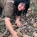 Melissa Nichols picks a morel mushroom April 13, one of many she found in one wooded hollow. Nichols...