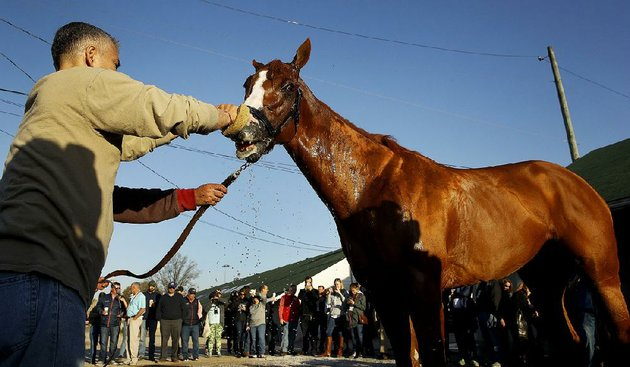 kentucky-derby-hopeful-justify-gets-a-bath-after-a-workout-tuesday-morning-at-churchill-downs-in-louisville-ky-justify-will-start-from-the-no-7-post-in-saturdays-144th-kentucky-derby