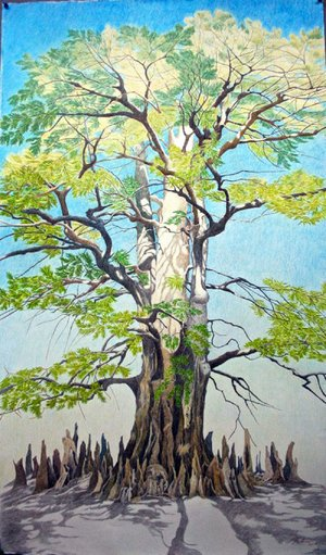 "Drawings by Linda Williams Palmer — including Bald Cypress (above) — are on display as part of ""Champion Trees of Arkansas"" in the Windgate Gallery, Center for Humanities and Arts, at University of Arkansas Pulaski Technical College in North Little Rock."