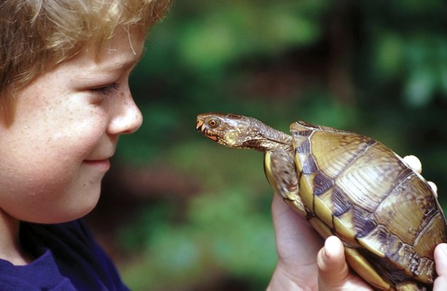 in-arkansas-children-like-jared-sutton-of-alexander-learn-early-in-life-that-box-turtles-are-harmless-and-make-great-temporary-pets