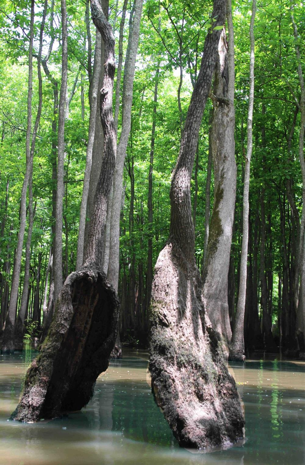 Bayou deview water trail traversing a vibrant wetland full of massive tupelos and cypresses the route is one of 13 sign marked paddle paths recognized by the arkansas game and fish freerunsca Gallery