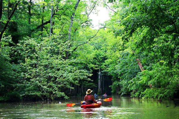 Photos mysterious and majestic bayou offers eye popping adventure stacy price follows paddling buddies onto the bayou deview water trail one of the 13 public paddling routes posted by the arkansas game and freerunsca Gallery