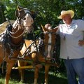 Kenny Underdown of Alpena gets horses ready Friday morning to pull his wagon 71 miles from Harrison ...