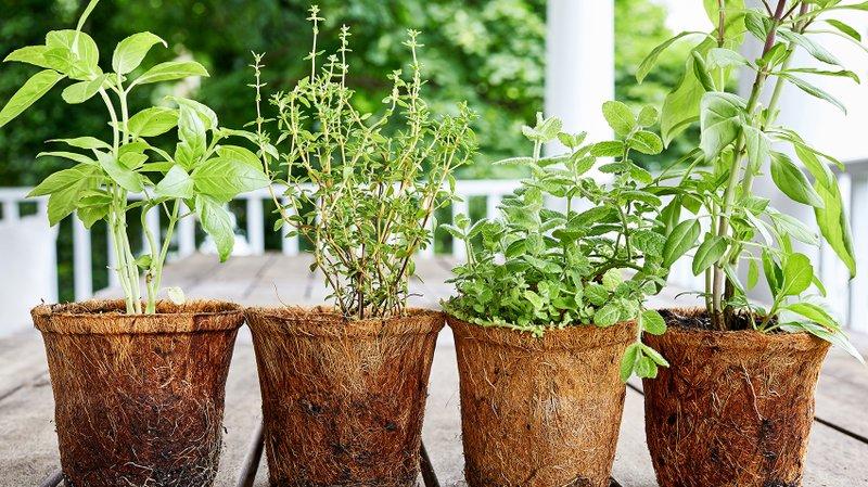 Pick Herbs You Ll Eat To Grow In Backyard