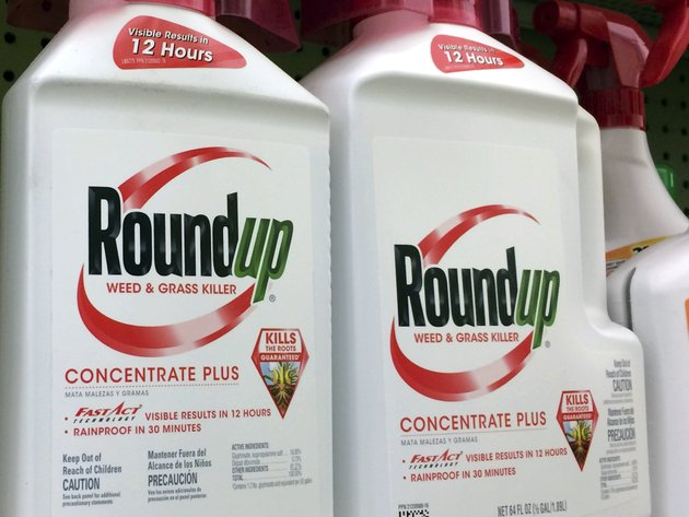 this-jan-26-2017-file-photo-shows-containers-of-roundup-a-weed-killer-made-by-monsanto-on-a-shelf-at-a-hardware-store-in-los-angeles-lawyers-for-a-school-groundskeeper-dying-of-cancer-asked-a-san-francisco-jury-during-a-trial-monday-july-9-2018-to-find-that-agribusiness-giant-monsantos-widely-used-weed-killer-roundup-likely-caused-his-disease-ap-photoreed-saxon-file