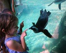 TM_0714Wildart_Zoo