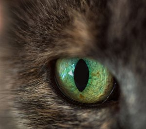 Courtesy photo The monthly photography contest challenge for August was macro photography. The first-place winner was Jean Berg with her photograph of a cat's eye. Becky Brubaker won second place, and Charles Kerr won third place.