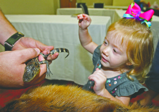Two-year-old Alyssa Winters interacts with a baby alligator from White Oak Lake State Park