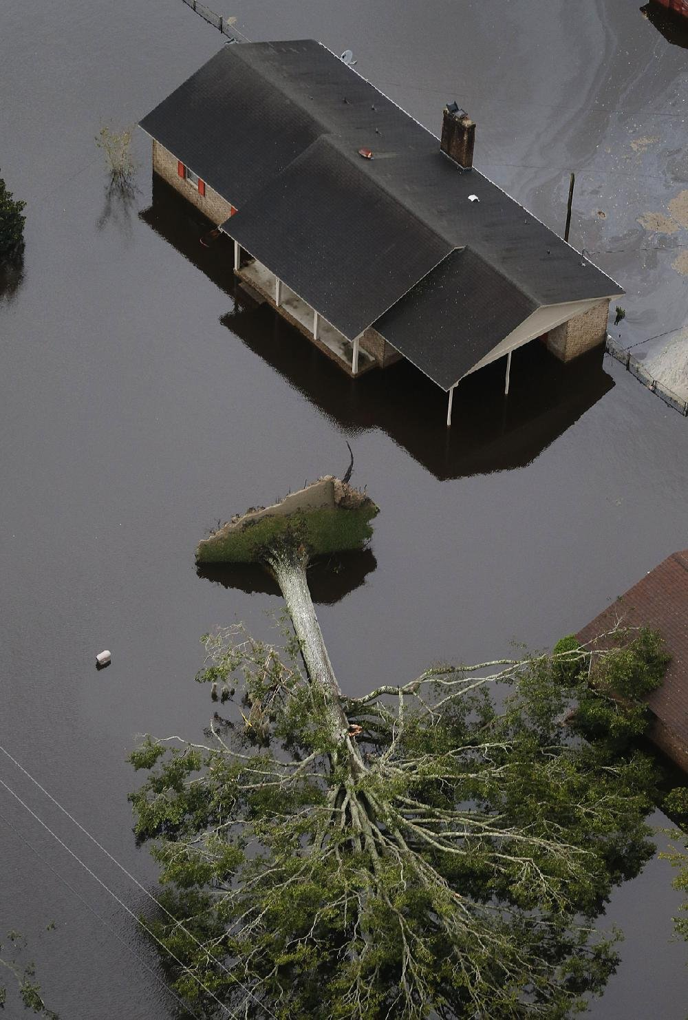 An uprooted tree lies next to a flooded home Saturday in New Bern, N.C.
